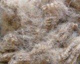 Haute fibre discontinue de polyesters de l'élastique HS