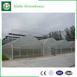 Casa verde de la película hidropónica multi del palmo para la fresa