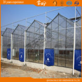 Amplamente utilizado Bela Multi-Span estufa de vidro