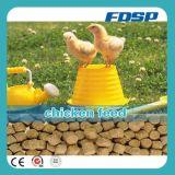 As aves domésticas alimentam a linha de produção com eficiência elevada