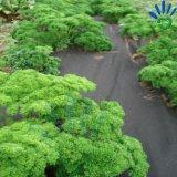 Bodendeckelweed-Sperren-Vliesstoff-Gewebe