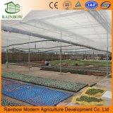 Los Invernaderos agrícolas con una forma Aquaponics Los sistemas de cultivo