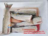 Cortadora caliente de la pista de los pescados de la venta Fh-200, máquina que taja principal de los pescados