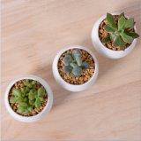 Flowerpot di ceramica bianco quadrato miniatura creativo