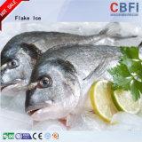 Чешуйчатый льда на рыбу в рыночных