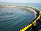 嵐および波は円の沖合いの水産養殖のケージに抵抗する