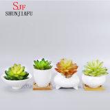 陶磁器の白い円形のシンプルな設計のSucculentの植木鉢