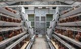 Het Systeem van de Kooi van de Kip van de laag of de Apparatuur van het Landbouwbedrijf van het Gevogelte