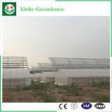 Groente van de Spanwijdte Muti van China de Commerciële/de Serre van de Plastic Film van de Tuin