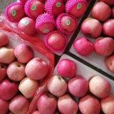 Buena calidad para la exportación de manzana Fuji fresco