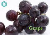 Prix de gros hydrosolubles Extrait de la peau du raisin pur / 20%~99 % resvératrol