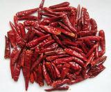 Neues Getreide-trockene rote Paprikas des Gemüses
