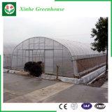 Serra di agricoltura del film di materia plastica per i pomodori/fiori