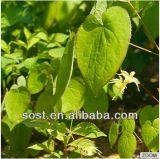 Orgánicos de alta calidad en polvo Extracto Epimedium