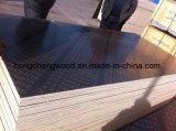 la película de 15m m hizo frente a la madera contrachapada del álamo de la madera contrachapada