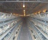 Schicht-Brüter-Huhn-Rahmen für Geflügelfarm (ein Typ Rahmen)