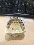 サポートされた歯科CAD/CCAMの製粉のインプラントは橋をねじで締めた