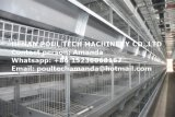 Птицы фермы слой курицы клеток оборудования системы (H)