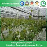 Fournisseur de serre chaude de film plastique de tomate de potager d'agriculture de qualité