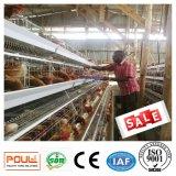 Цыпленок клеток для бройлеров и слоя в доме с фермы строительство