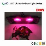 100W ultrasottili LED si sviluppano chiari per le piante della serra