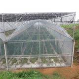Portata poco costosa di prezzi di fabbrica singola/traforo agricolo multi serra di vetro della portata
