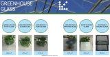 4mm moderados/vidro temperado para o projeto da estufa da horticultura