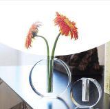 Vaso acrilico libero creativo di vendita diretta della fabbrica di Qcy bello