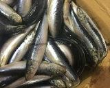 A sardinha fresca para as conservas de sardinha