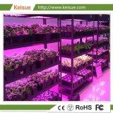Azienda agricola verticale idroponica della famiglia aperta di Keisue