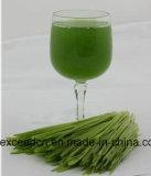 Bestes verkaufen100% natürliches grünes Gersten-Gras-Puder