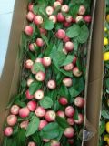 Plantas y flores artificiales del aerosol Gu0112164738 de la granada
