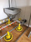 Sistema que introduce del pollo de la cacerola automática del alimentador