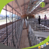 Tenda individual galvanizada da pena de porco da gestação do MERGULHO quente