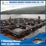 Sistema quadrado de gaiolas agrícolas para cultura de tilápias