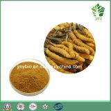 De zuivere Natuurlijke Zwamvlokken Cordyceps halen de Polysacchariden van 10%~40%