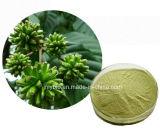 Ingrediente bruto natural puro Extracto de Camptotheca Acuminata, 98% de camtotecina
