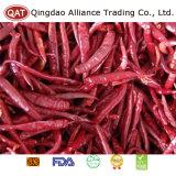 Pimenta seca vermelho para exportar