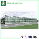 Serra di vetro commerciale con il sistema di controllo di clima