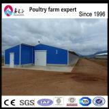 Modèle de Chambre de ferme avicole de grilleur de poulet d'oeufs de couche de structure métallique de coût bas équipé de la cage de poulet