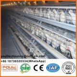 Poul Tech Layer Gaiola de frango para exploração avícola (galvanização a quente)