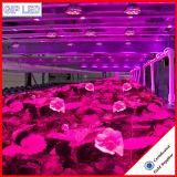 24W levou crescer a luz para culturas hidropónicas/Piscina/Jardim/Emissões