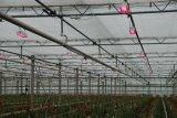 lumière de jardin du large spectre DEL de l'ÉPI 200W avec l'aluminium