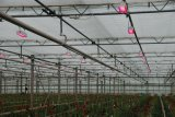 200W COB Full Spectrum Jardín de luz LED de aluminio con