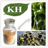 Haut brun naturel extrait de l'Algue fucoxanthine 20%