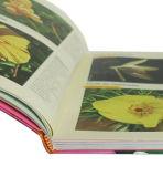 두꺼운 표지의 책 책과 저가 책 인쇄