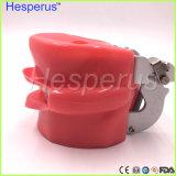 Pista fantasma dental para la escuela dental Hesperus modelo de enseñanza