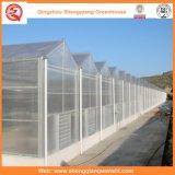 토마토 꽃을%s PC 장 농업 녹색 집