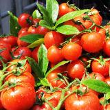 Fertilizante orgânico líquido de aminoácidos