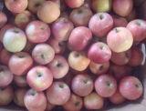 Sacs en plastique FUJI Apple
